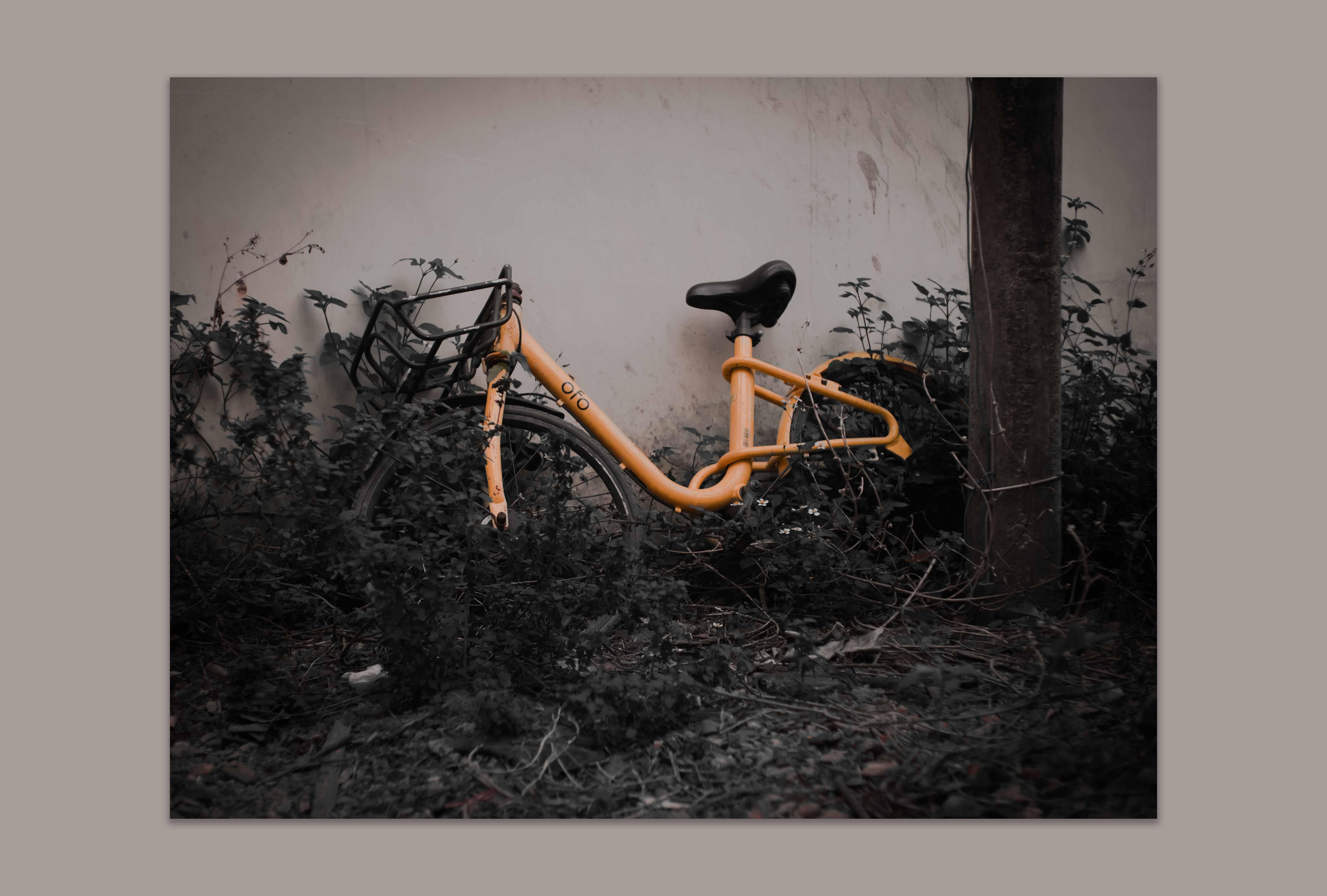 被遗弃的共享单车